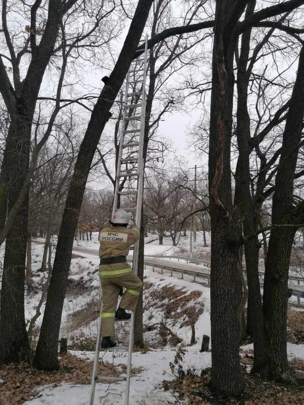 Пожарные Прохоровки сняли котёнка с дерева с помощью  трехколенной  лестницы